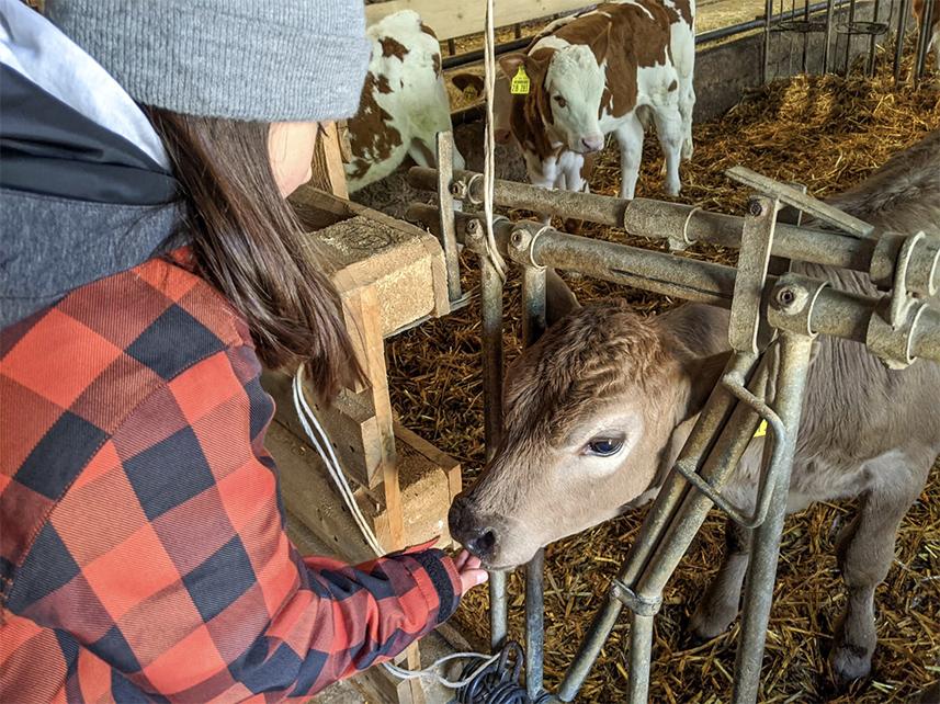 Insel Föhr Bauernhof Tiere füttern Bio Fleisch